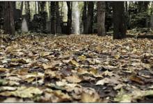 Herbst_Autumn